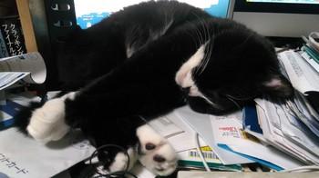 猫 ディスプレイ ごろごろ 寝る